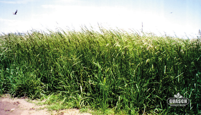 de Estados Unidos del tipo continental, de floración semi tardía